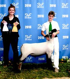 Sampson Sheep | Winners